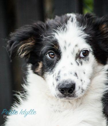 Roscommon_SPCA-1-68