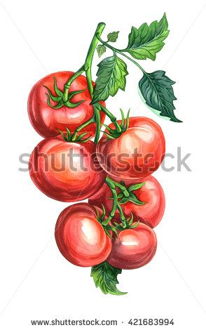 Group of tomatoes with leaves on a branch. Watercolors drawing.