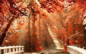 Αποτέλεσμα εικόνας για wallpapers hd autumn