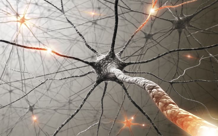 Neurons in the brain communicate via electrical impulses and neurotransmitters.