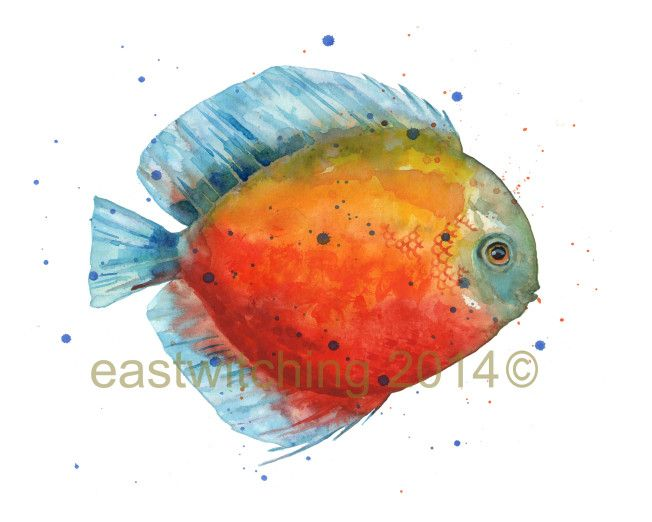 Painting discus fish for fun discus fish watercolor for Fish eyes in paint