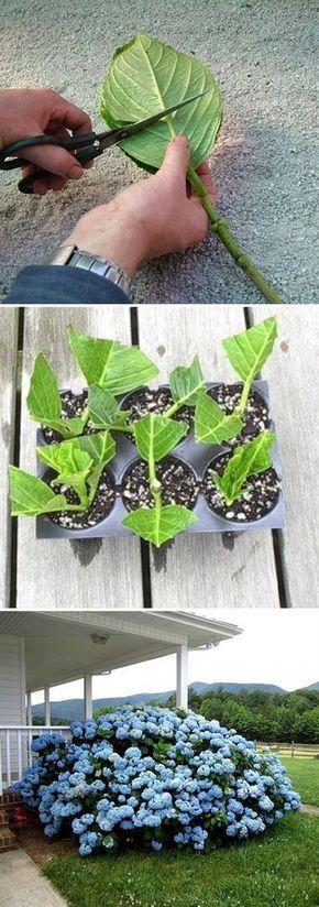 10 ideas brillantes plantas propagar para arraigar y   Postris