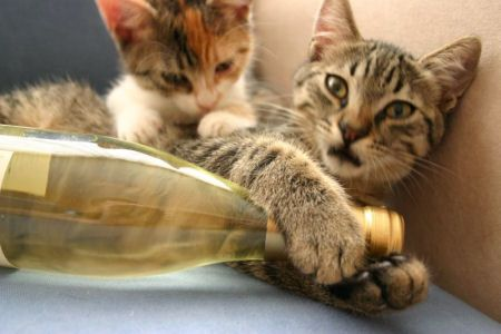 Stop Whatever You're Doing, There's A Wine For Cats Now- from autostraddle.com