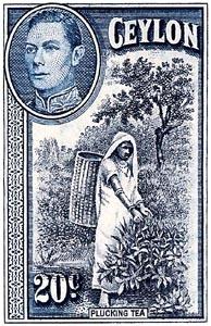 Ceylon plucker