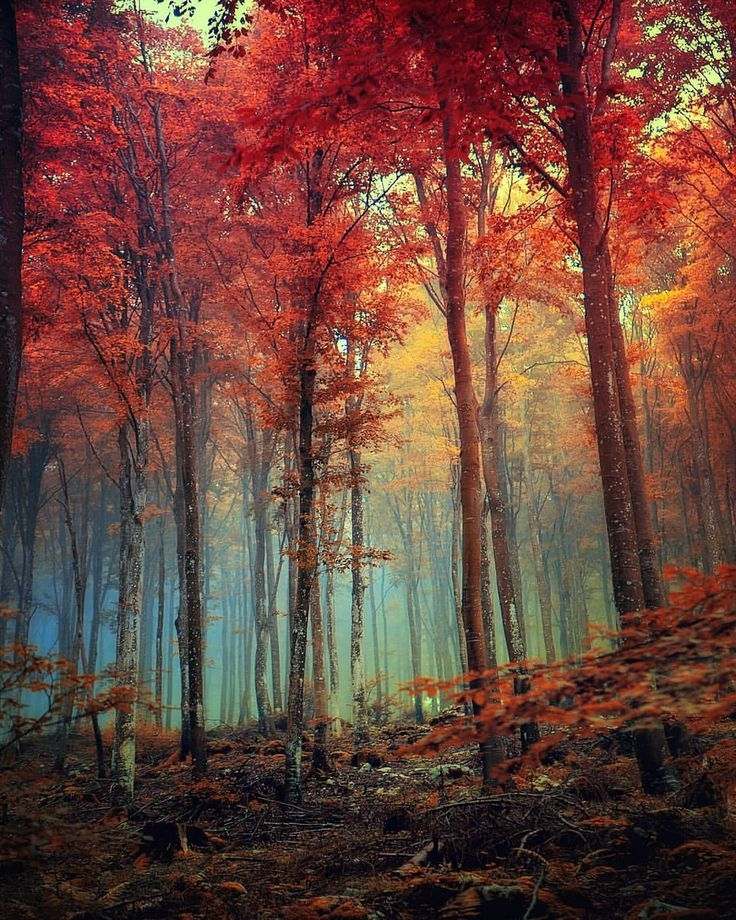 Magical Landscape And Nature Photography By Jan Poloni Landscape Photography Nature Nature Pictures Woods Photography