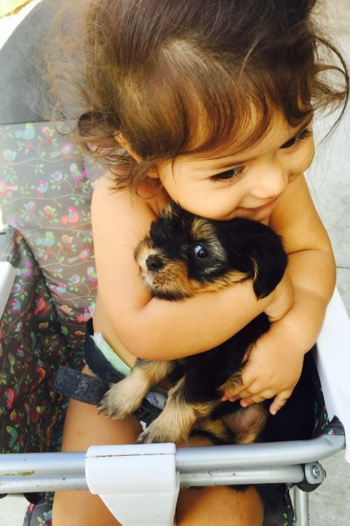 Awww, how Cute is this - Totally Adorable Happy Little Girl cuddling her new Baby Yorkie Puppy!!!