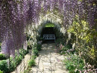 I would love for this to be in my backyard.: Secret Gardens, Wisteria Tunnel, Arches, English Gardens, Quiet Places, Backyard, Waterperri Gardens, Wisteria Arbors, Beautiful Sets