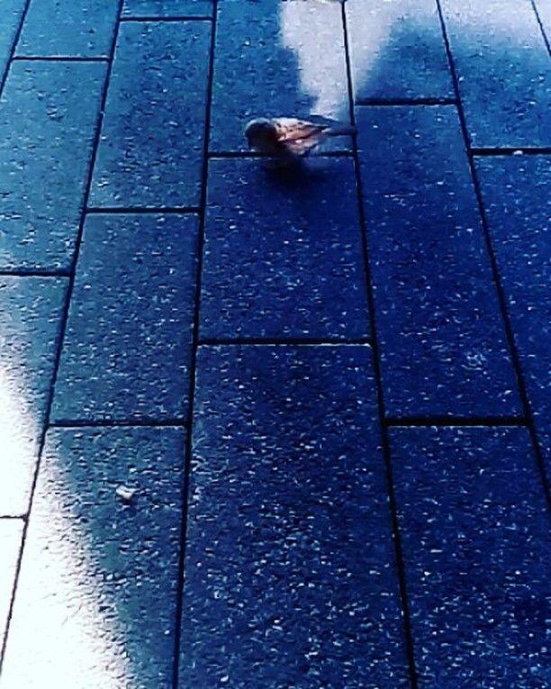 Ein kleiner frescher Spatz wollte mir wohl die Brezel streitig machen. Nichts da nichts gibts für kleine Diebe. #instavideo #instaclip #instagood #urbach #schorndorf #schwäbischgmünd #Aalen #bäckerei #brezel #paneria #brot #animalpic #animalvideo #videooftheday #tiervideo #tierfilm #vogel #spatz #sperling #bird #birds #bunny
