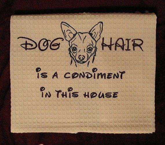 Chihuahua: Cat Hair, Labs, Dogs Hair, Pet, Baby Animal, So True, Dogs Owners, Chihuahua, In This Houses