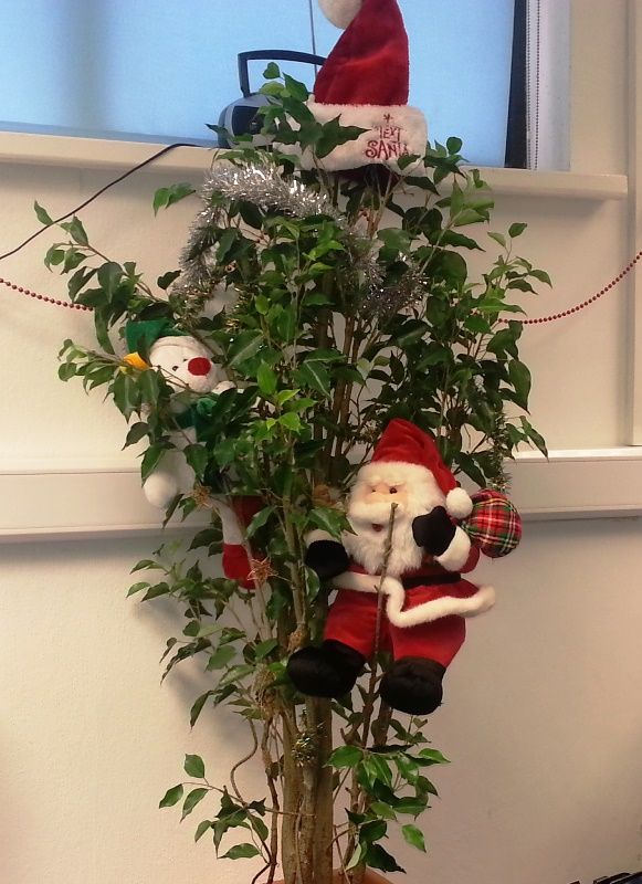 If you run out of Christmas Trees in your office, why not have a Christmas themed plant !