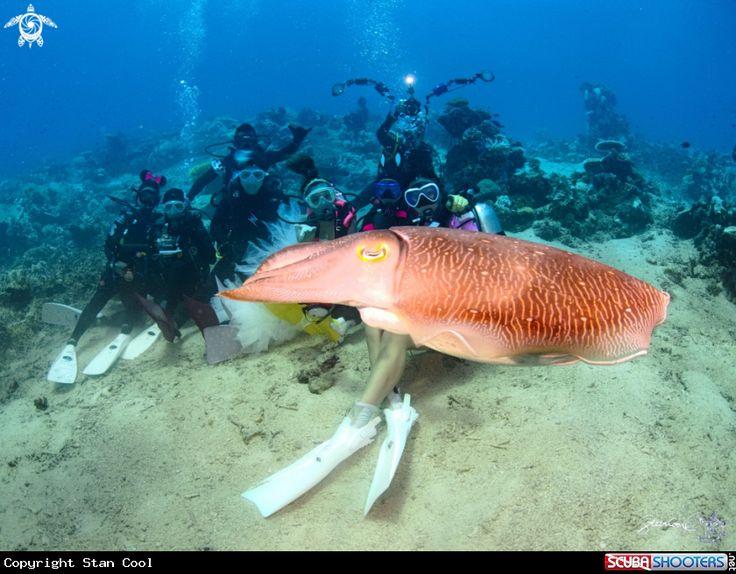 Cuttlefish  in Komodo Island - Indonesia