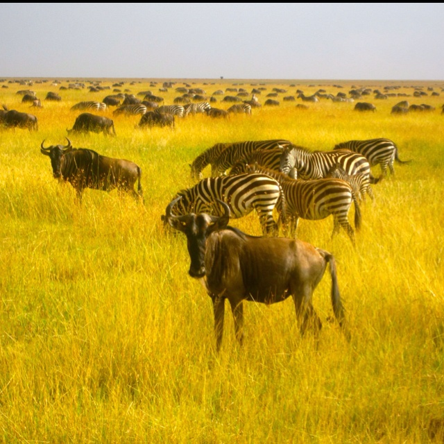 At the great migration in Tanzania!