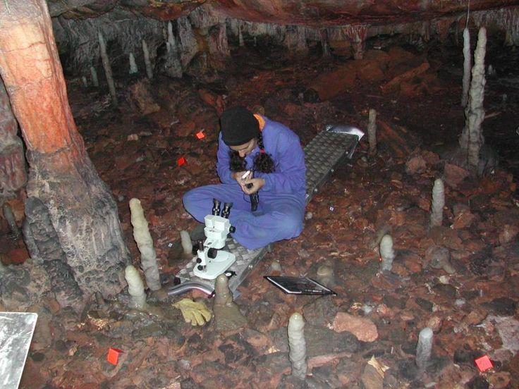 La cueva de La Garma - Galeria fotografica el Diario Montañes