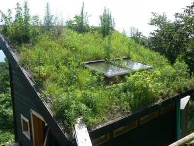 ! Tak for mad - Nordic Life: current state of the green roof