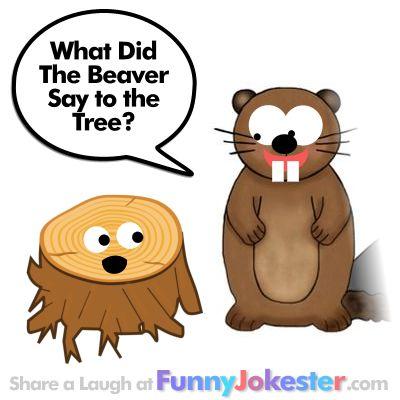 funny beaver joke for kids with hidden answers and original cartoons funny jokester. Black Bedroom Furniture Sets. Home Design Ideas