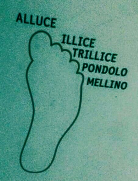 Italian vocabulary - Toes of the feet /Dita dei piedi