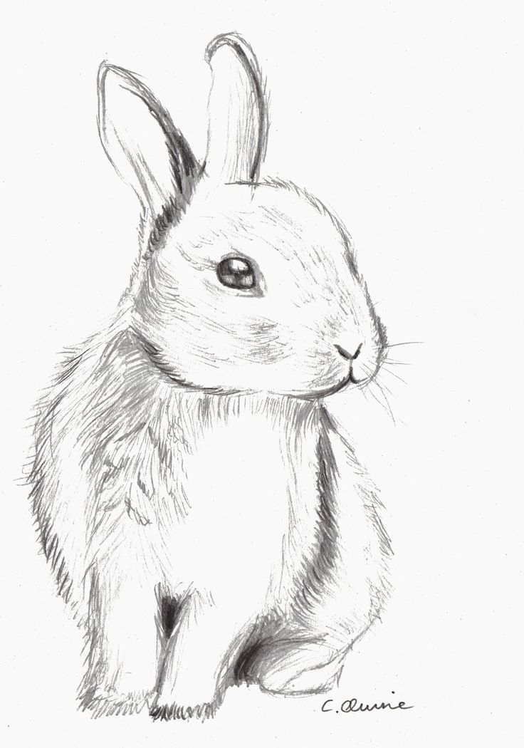 This is an image of Dramatic Cute Bunny Pictures Drawing