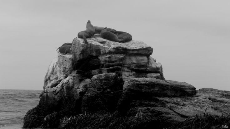Some sea lion