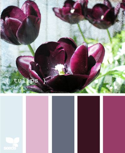 tulips are pretty, but I LOVE that deep rich color---which is soon to be our living room color!!!