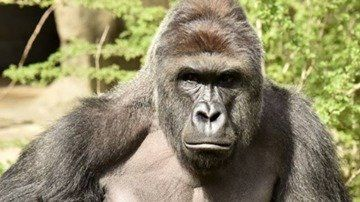 Petition · U.S. Fish and Wildlife Service: Justice for Harambe · Change.org