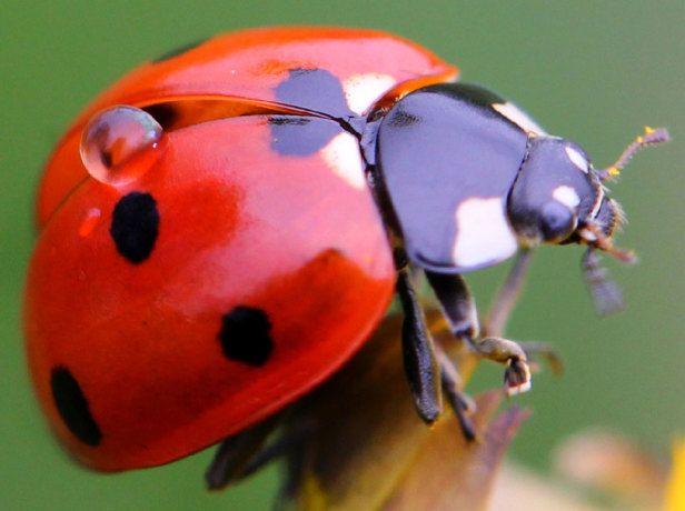 about garden insects soc pinterest garden pinterest garden