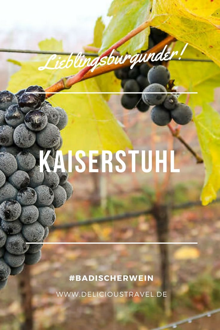 Badischer Wein neu entdeckt: Die Weinregion Breisgau gilt noch als Geheimtipp unter Weinkennern. Saftige und fruchtbetonte Burgunder-Weine machen echt Spaß und das ziemlich günstig. Am Kaiserstuhl wachsen die Weine auf Vulkanböden, die Kraft und Fülle ins Glas zaubern.