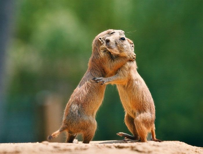 "21) ""One, two three. One, two, three. We're doing it Bob, we're dancing like them funny humans!"""