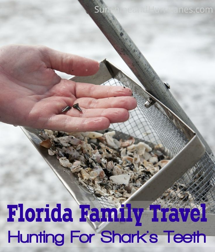 Planning a trip to sunny Florida? Don't miss the opportunity to find real fossils and keep the kids busy learning while you're at the beach! Be sure to check this post out and find my SUPER SECRET location near Venice, you'll leave with a bucket of treasures! Florida Family Travel Searching For Shark Teeth