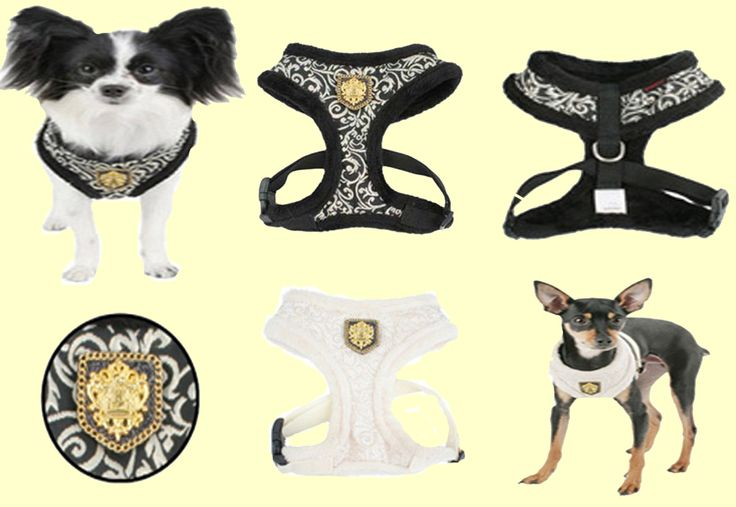 Don't miss your chance to get this great Gala (winter) harness from Puppia!  Stock is very limited. Regular retail is $29.00 but they are sale for only $15.00