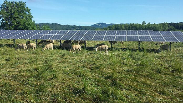 Researchers Are Discovering A Variety Of Benefits Resulting From Installation Of Solar Pv Systems On Farms An Solar Agricultural Land Solar Panel Installation