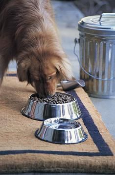 Dog Liver Disease Diet