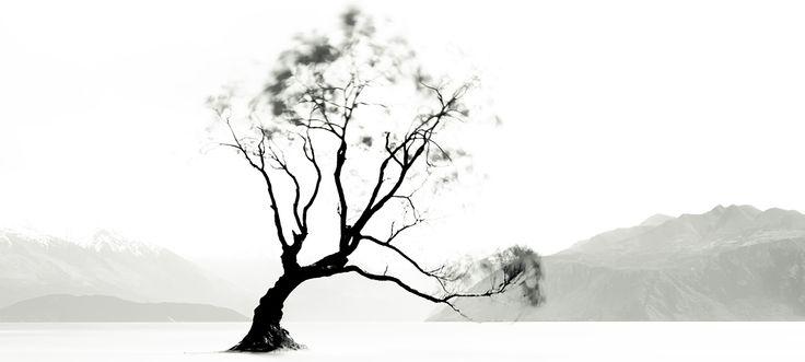Wanaka Tree New Zealand