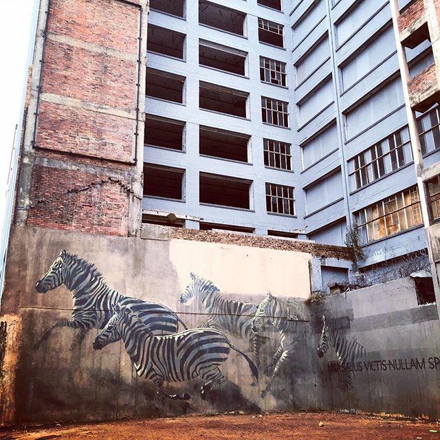 Awesome wall art in Johannesberg. #art #graffiti #street #zebra #africa…
