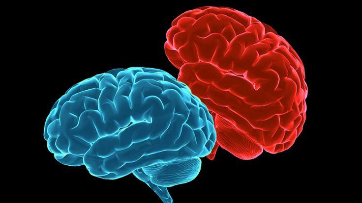 red blue brains