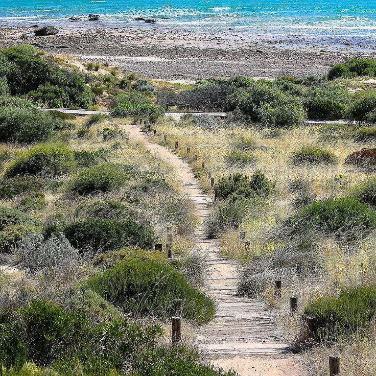 Nature. .. Moments by Charlie BLOG & Online Shop at momentsbycharlie.com. ..⠀⠀⠀⠀ #australia #nature #photography #naturephotography #adelaide #melbourne #sydney #hiking #hikingtrail #naturelove #naturelovers #lifestyleblog #lifestyle #harmony #peace #trees #landscape
