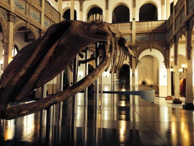 ballena en el museo de historia natural/ a wale in the natural history museum