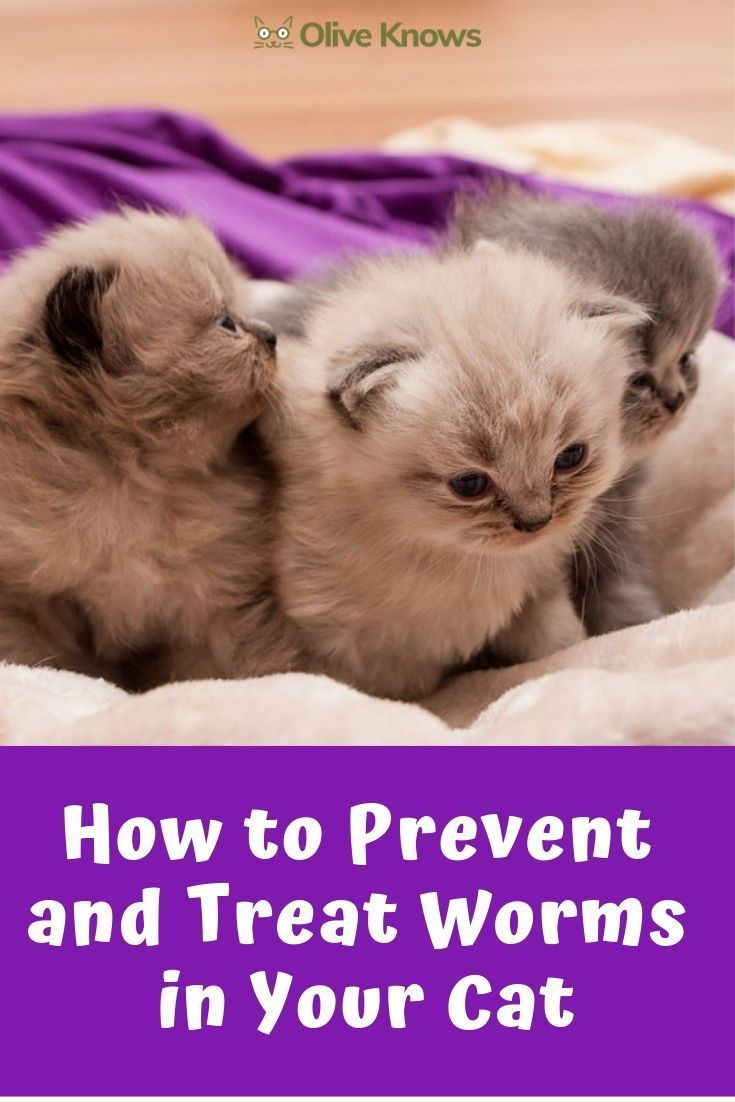 How To Prevent And Treat Worms In Your Cat Cat Care Cats What Cats Can Eat