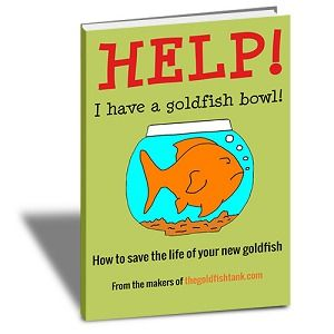Goldfish Care: How to take care of goldfish - The Goldfish Tank