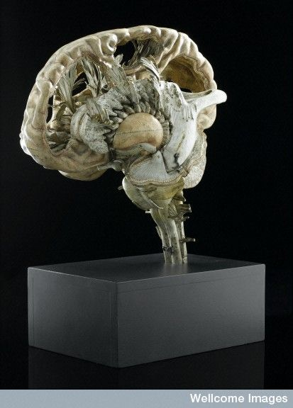 The model shows a sectioned human brain made from papier mâché. The parts can be removed to show the internal structure of the brain. Each is labelled with a number and some of the parts have the name of the section printed in French. This model was used as an aid to teach anatomy. France, 1801-1850.  (Auzoux??)