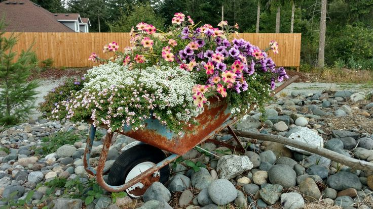 Wheelbarrow, flowers, tropical punch of color
