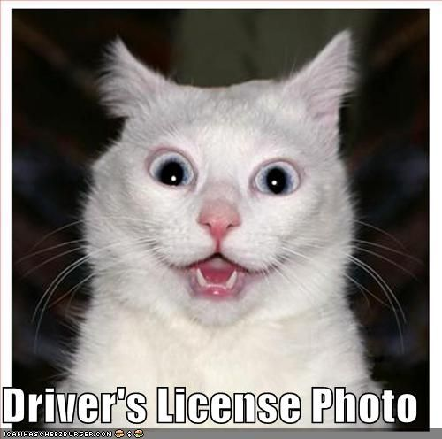 Funny Cat Pictures with Captions   ... funny cat pictures with captions, cute cat pictures, funny cat