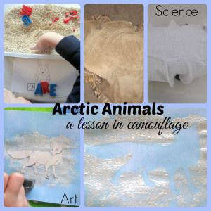 Arctic Animals: a lesson in camouflage We studied arctic foxes and arctic hares and did a cool art project as well as a fun way to learn about camouflage (Learning is Messy)