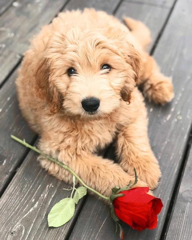 Der süßeste Welpe des Tages 19 Bilder – WELPEN – #Bilder #des #Welpen …