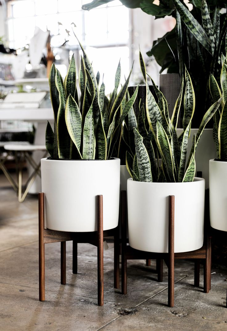 Modernica Planter – White ceramic cylinder with walnut stand available at shopPi…
