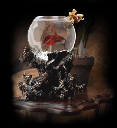 33 best images about fish bowls on pinterest wall mount for How much are betta fish at petco