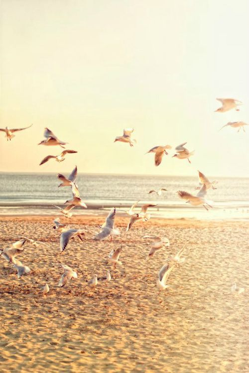 The call of seagulls on a sunny day always makes me think of holidays at the beach