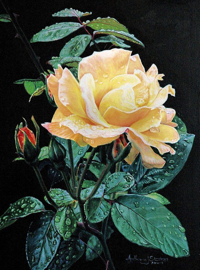 The Yellow Rose, by Anthony J Stokes