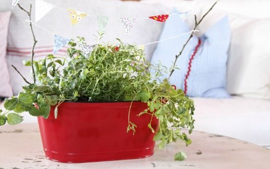 Three easy, small herb garden ideas #OrganicGardening #Organic Cid Botanicals