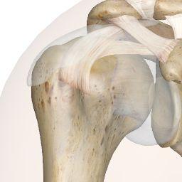 Subscapular Bursa to Shoulder Joint   Interactive Anatomy Guide.... great interactive anatomy site