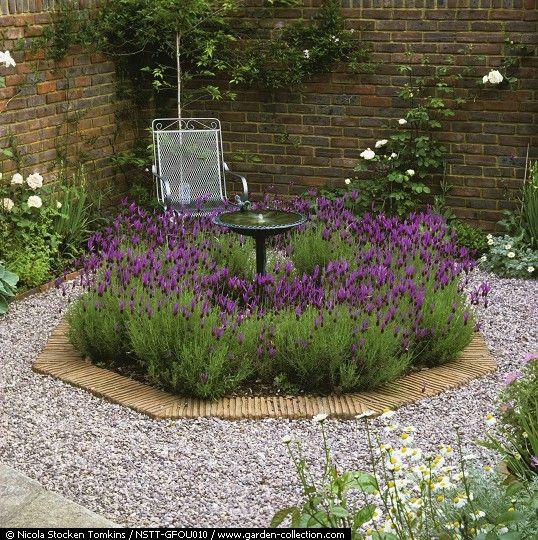 33 best landscaping with lavender images on pinterest for Garden design ideas lavender